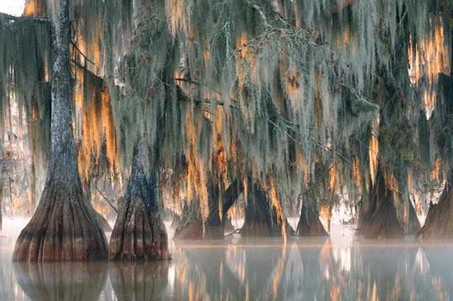 Khu vực có cây bách hói cổ đại siêu hiếm trên Trái Đất còn sót lại.