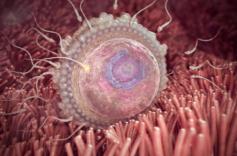Quá trình hình thành và phát triển thai nhi theo từng tuần