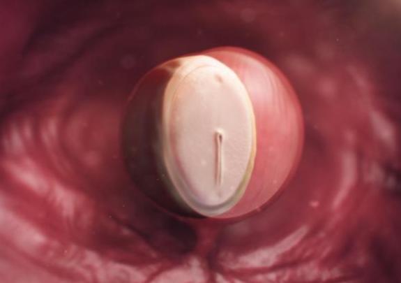 Quá trình hình thành và phát triển thai nhi theo từng tuần - Tuần thứ 3